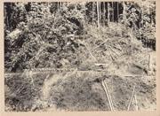 WWII Japanese Propaganda Photo Of Tranposrt Unit On Jungle Trail