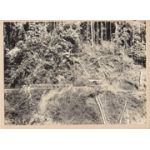 WWII Japanese Propaganda Photo Of Tranposrt Unit On Jungle Trail